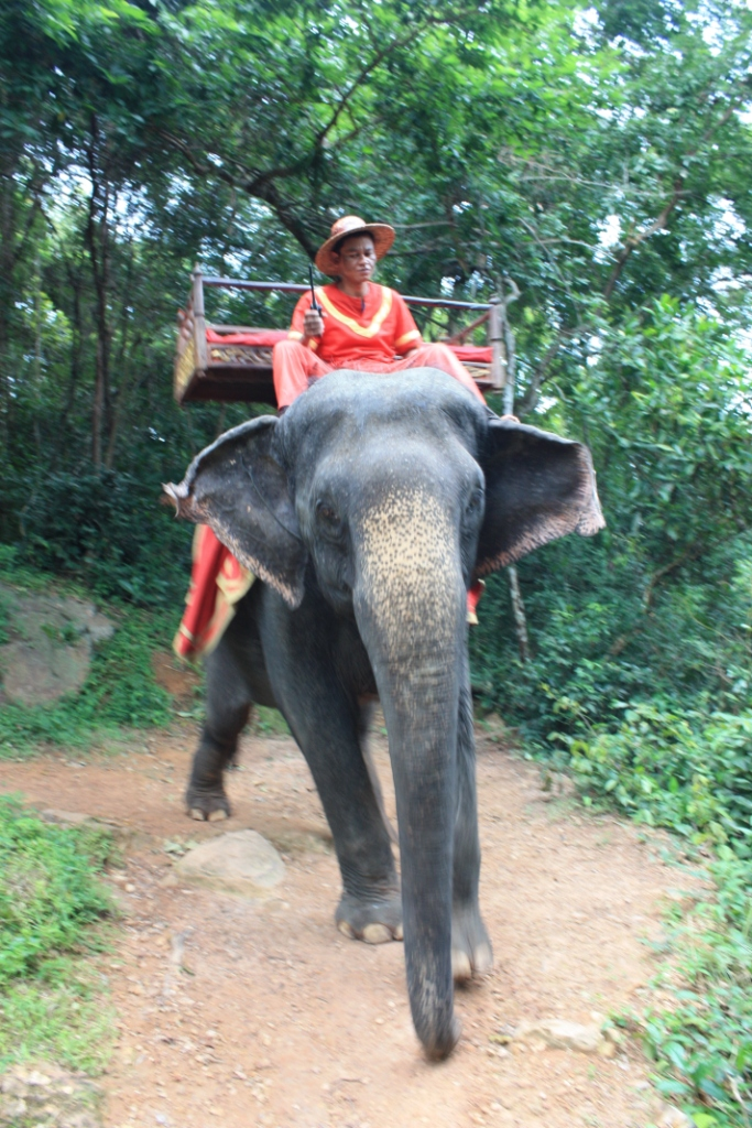 Elephant on the trail up to Phnom Bakhang