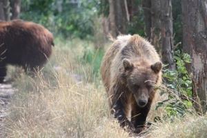 "Taken at a ""bear park"" in Veresegyház, Hungary"