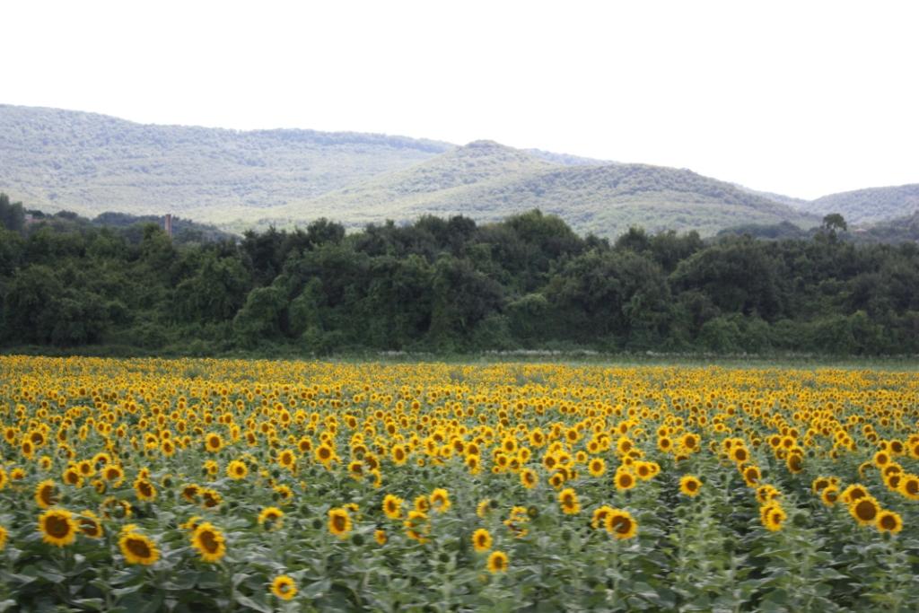 Taken between Szentendre and Visegrad