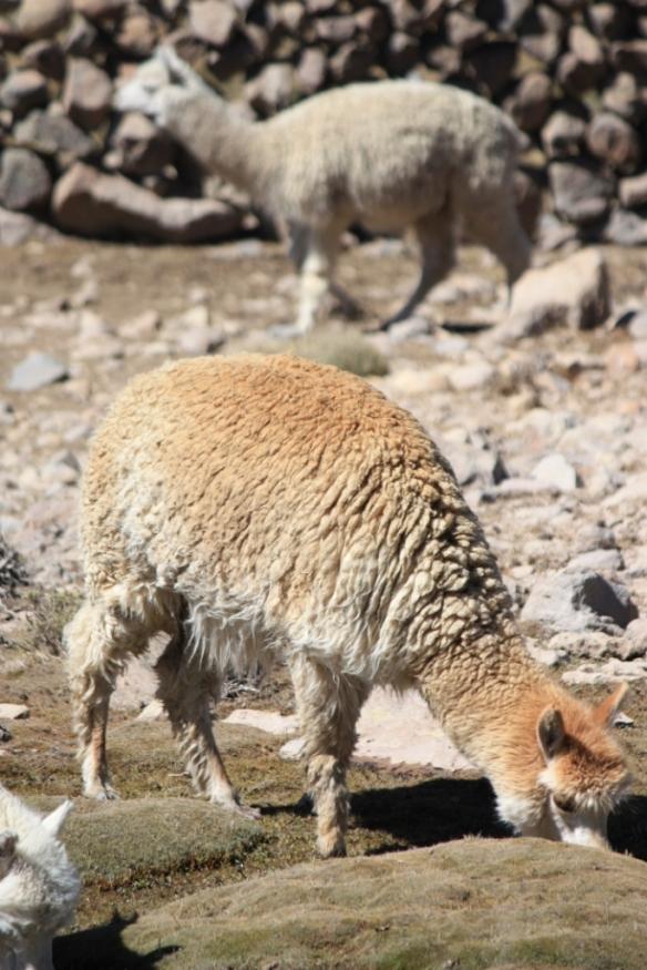 Taken in Blanca National Reserve in 2010