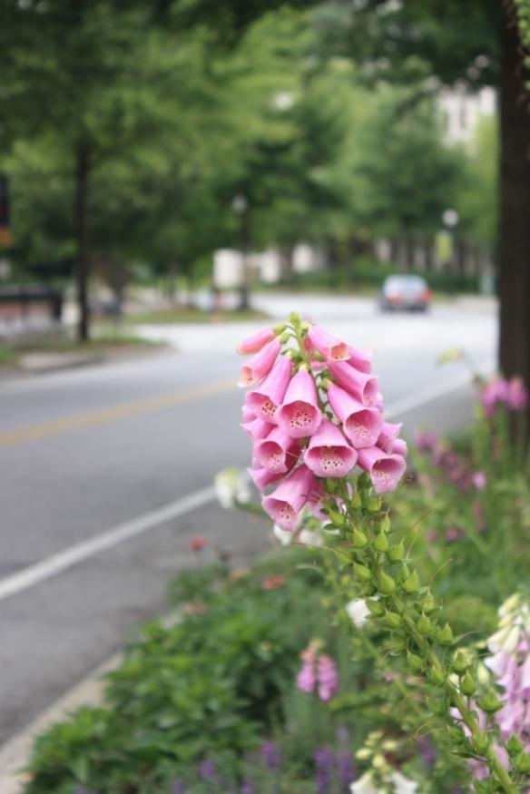 Taken June 2, 2013 at Emory University in Atlanta, Georgia