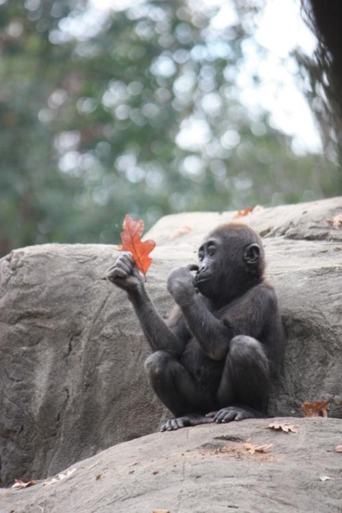Taken in the Summer of 2012 at Zoo Atlanta