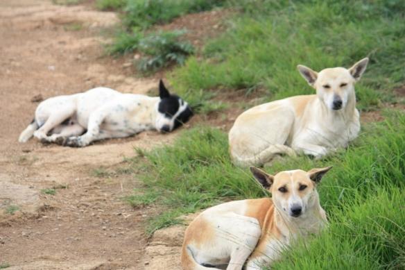 Taken in September of 2013 in Nandi Hills, India.
