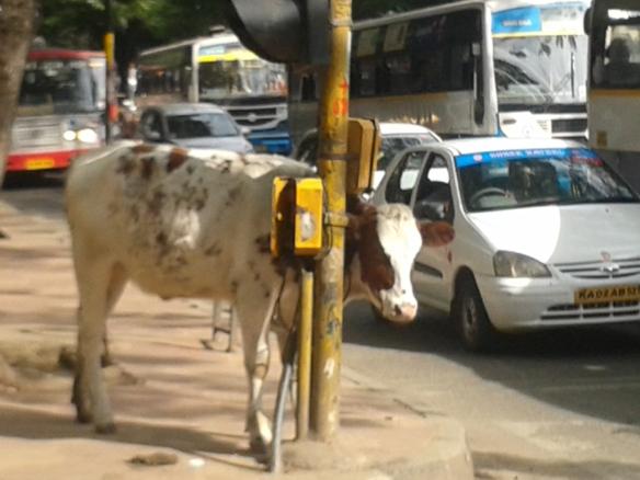 Taken October 8, 2013 in Bangalore.