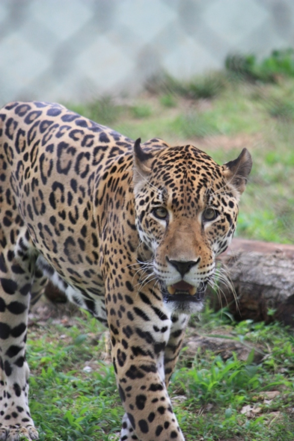 DAILY PHOTO: Leopard Look