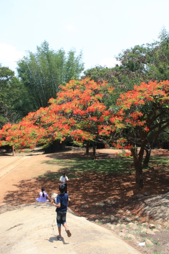 Taken on May 18, 2014 in Cubbon Park, Bangalore.