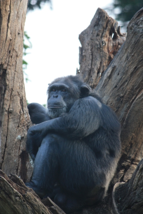 Taken on October 3, 2014 in the Mysore Zoo.