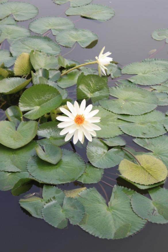 Taken at the Bibi Ka Maqbara in Aurangabad on November 18, 2014