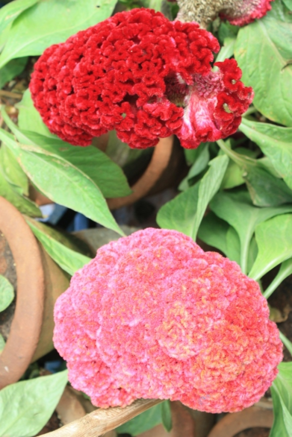 Taken in January of 2014 at the Republic Day Flower Show at LalBagh Gardens