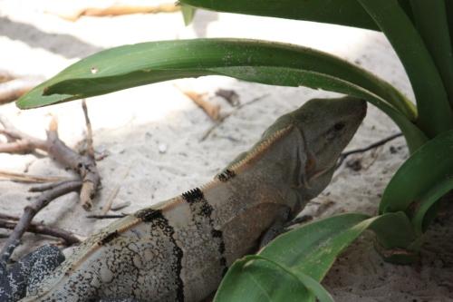 Taken on Isla Contoy in the Yucatan