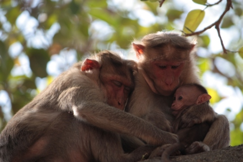 Taken on March 28, 2015 at Dodda Alada Mara (Big  Banyan Bangalore)