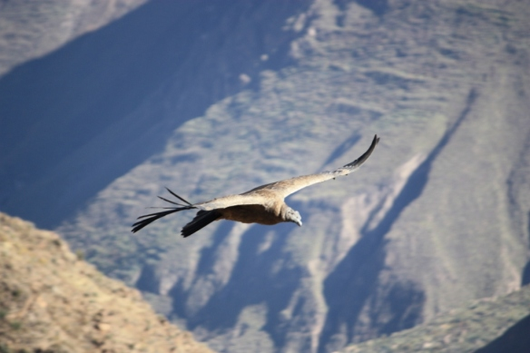 Taken in July of 2010 at Colca Canyon, Peru