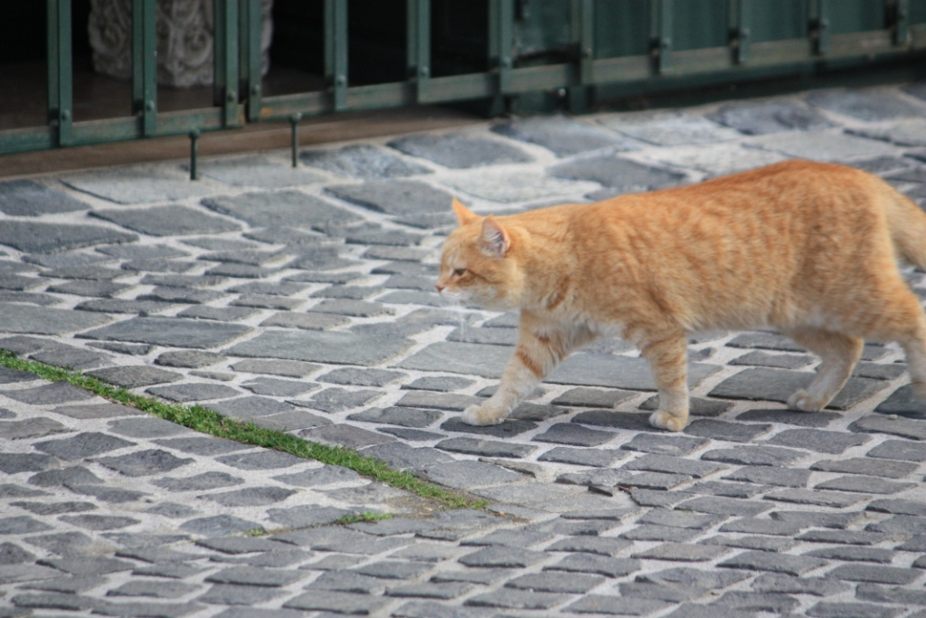 Daily Photo Cat On Cobbles 171 Stories Amp Movement