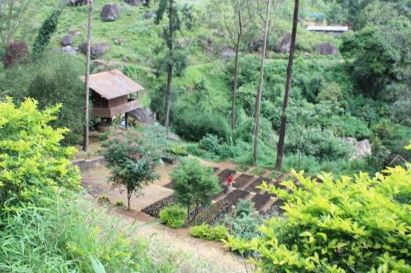 Taken on May 25, 2015 near Ramboda Falls, Sri Lanka