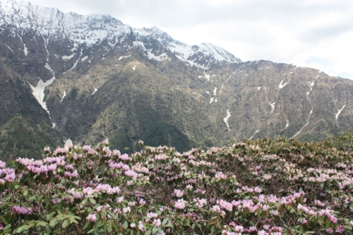 Taken on June 10, 2015 in Great Himalayan National Park (GHNP)