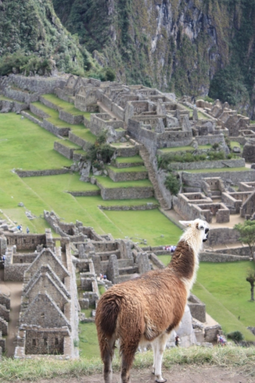 Taken in July of 2011 at Machu Picchu