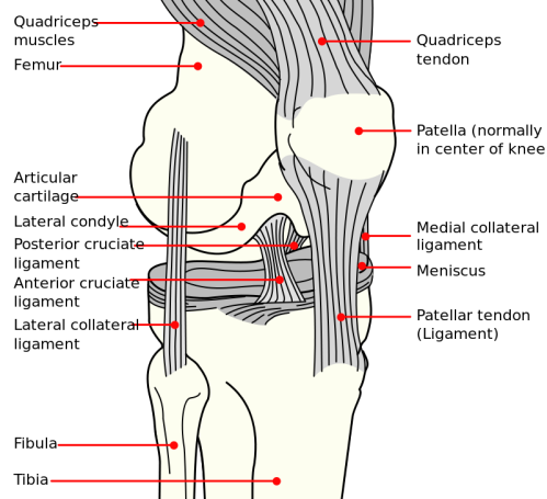 diagram of normal knee bent knee diagram #14