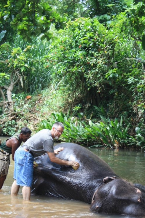 Taken in May of 2015 at Millennium Elephant Foundation in Kegalle, Sri Lanka