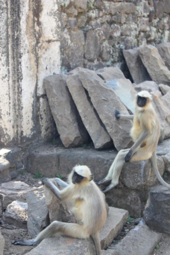 Taken in November of 2014 at Daulatabad Fort
