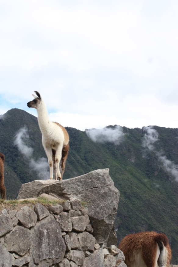 Taken in the summer of 2011 at Machu Picchu