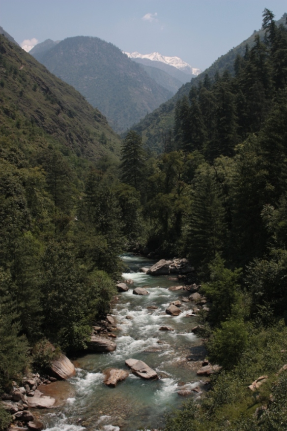 Taken in June of 2015 in the Great Himalayan National Park