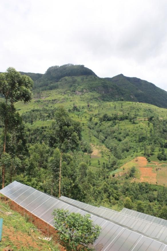 Taken in May of 2015 near Ramboda Falls, Sri Lanka