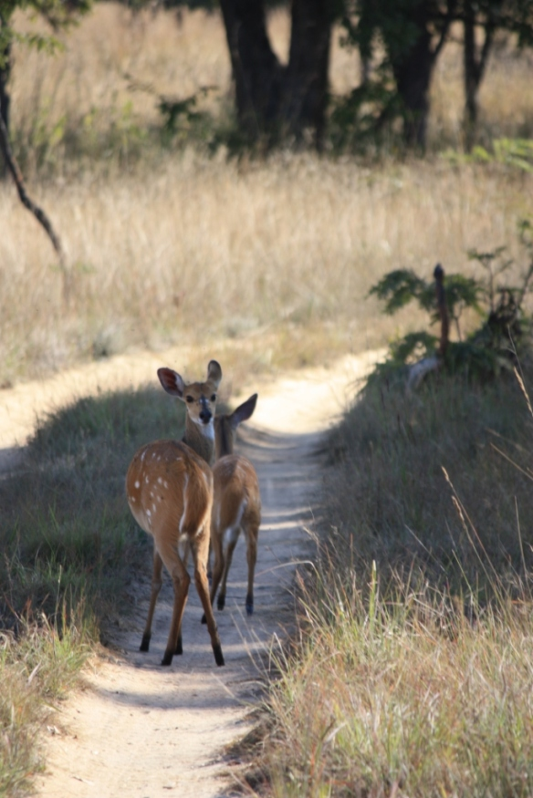 Taken in May of 2015 at Chaminuka Game Reserve