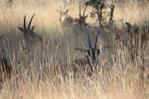 Taken in May of 2016 near Lusaka, Zambia