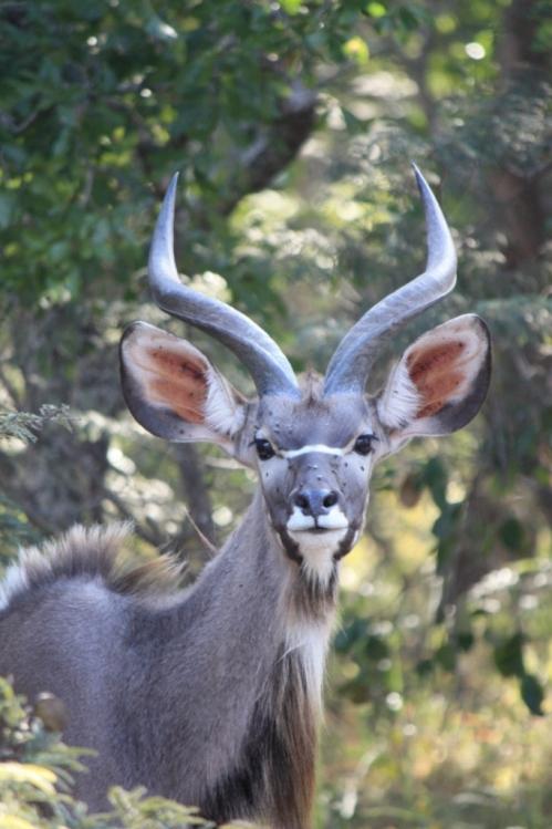 Taken in May of 2016 at Chaminuka Game Reserve near Lusaka