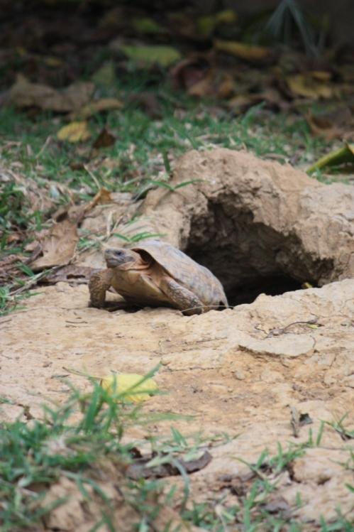 Taken in May of 2016 at Kalimba Reptile Park near Lusaka