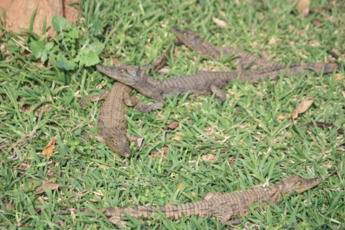 Taken at Kalimba Reptile Park near Lusaka, Zambia in May of 2016