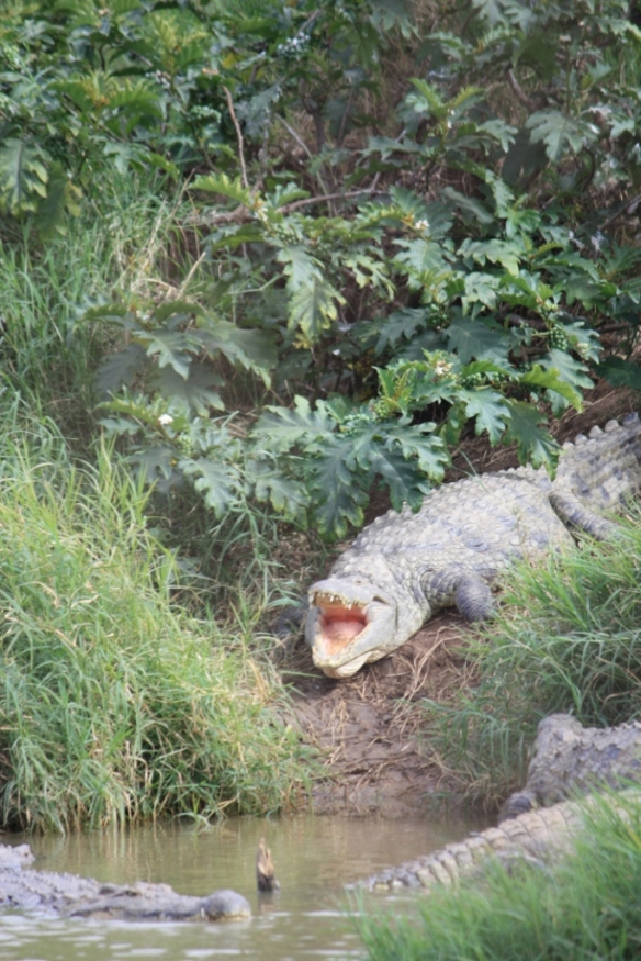 Taken in May of 2016 at Kalimba Reptile Park in Zambia