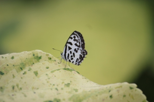 Taken in Panjim, Goa on October 9, 2016.