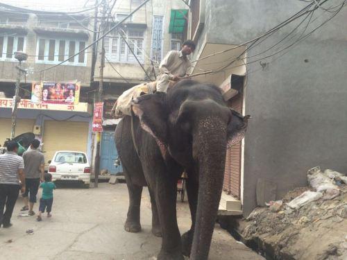 Taken in April of 2016 in Amritsar
