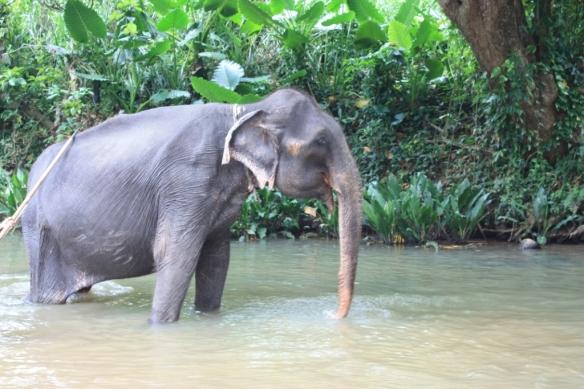 Taken in May of 2015 in Sri Lanka