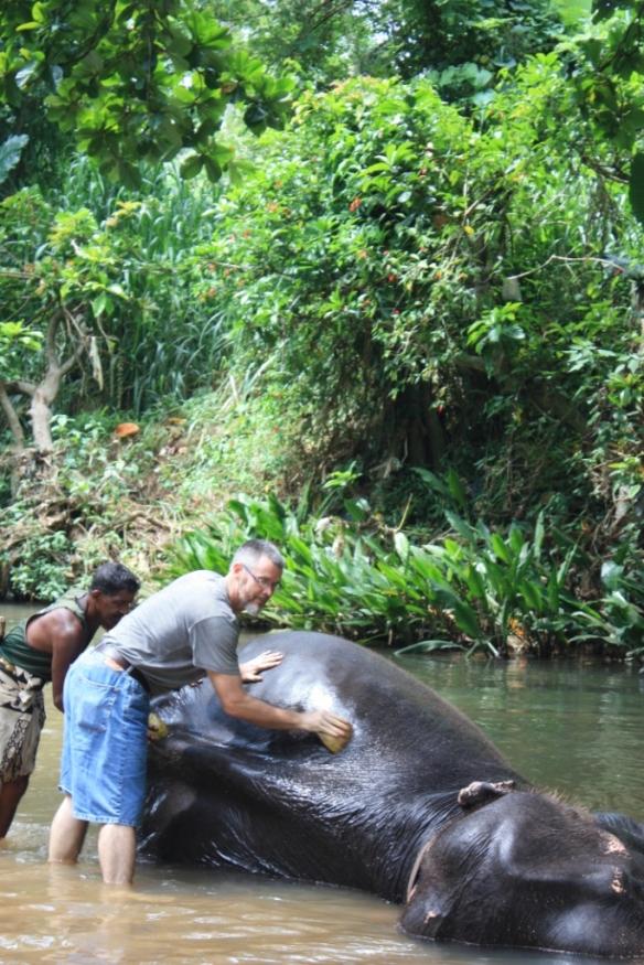 elephant scrubbing