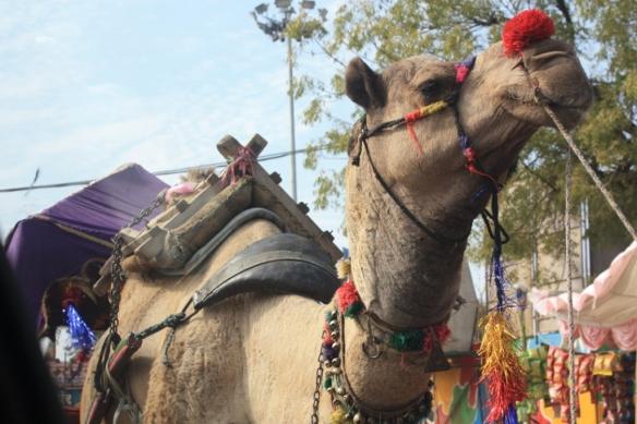 Taken near Pushkar in November of 2015