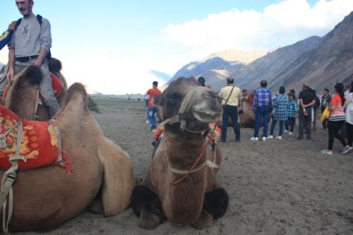 Taken in the Summer of 2016 in Nubra Valley, Ladakh